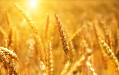Skapa en jordbruksblogg